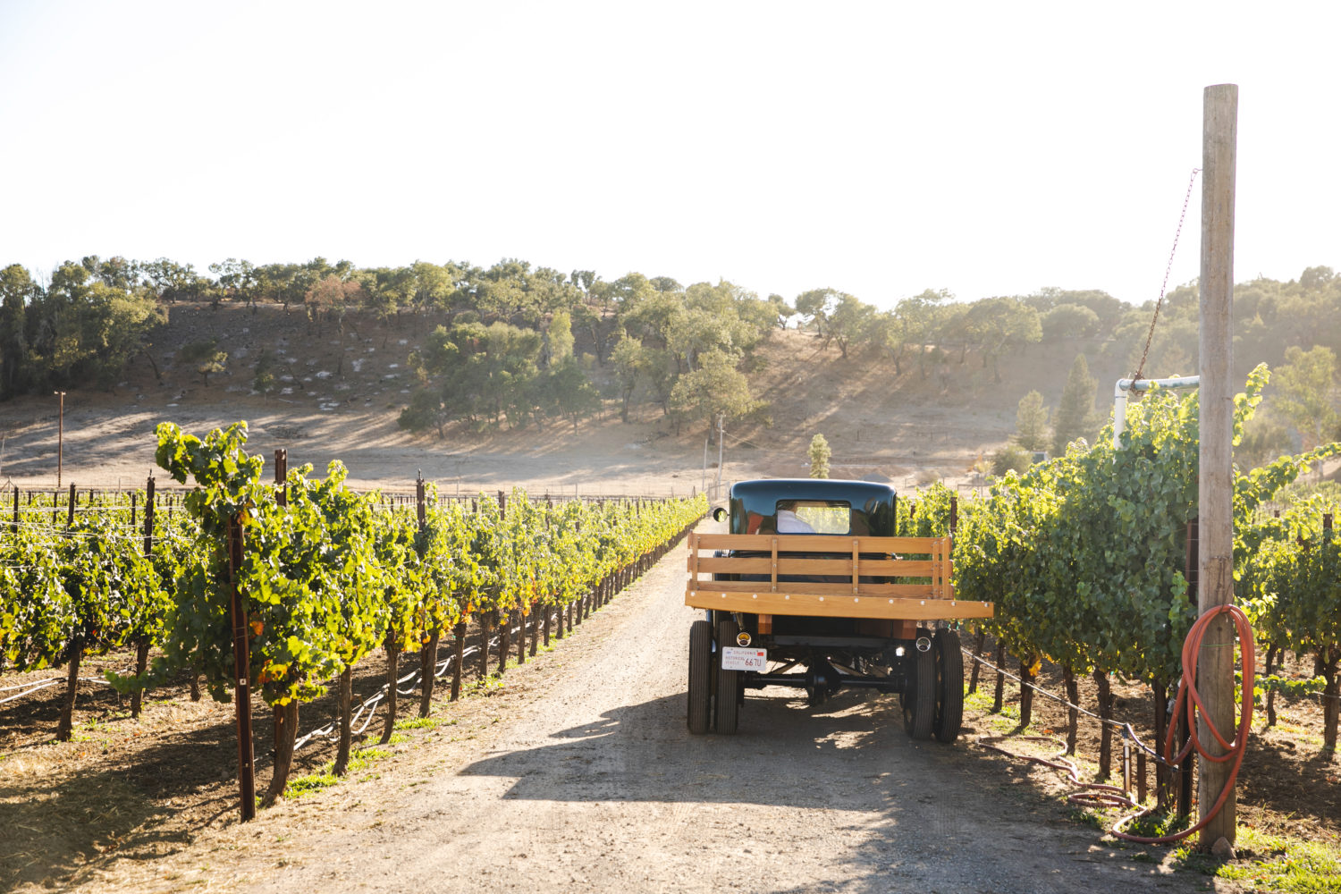 truck in vineyard